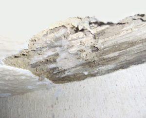 Accechmur - Problèmes d'humidité - La mérule